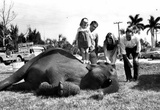 Girl Standing on Elephant 1965 Archival Photo Poster Prints
