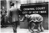 Elephant in Court 1965 Archival Photo Poster Prints