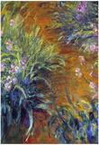 Claude Monet Irises Art Print Poster Posters