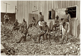 Apalachicola Shuckers 1909 Archival Photo Poster Print Prints