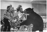 Bear Wrestling in Action 1978 Archival Photo Poster Prints