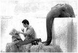 Elephant Taking Trainers Lunch Archival Photo Poster Photo