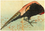 Katsushika Hokusai Pheasant on the Snow Art Poster Print Prints