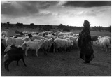 Woman Goat Herder Archival Photo Poster Print Poster