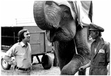 Circus Elephant 1978 Archival Photo Poster Poster