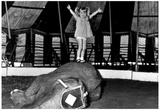 Girl Standing on Elephant 1975 Archival Photo Poster Photo