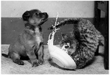 Puppy and Kitten Spilling Milk Archival Photo Poster Print Poster