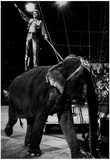 Circus Elephant 1992 Archival Photo Poster Posters