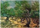 Vincent Van Gogh Olive Grove 2 Art Print Poster Posters