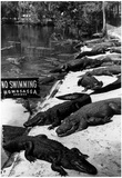 Alligators in Homosassa Springs Florida Archival Photo Poster Poster