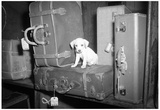 Puppy with Suitcases Archival Photo Poster Print Posters