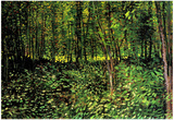 Vincent Van Gogh Trees and Undergrowth Forest Art Print Poster Posters