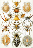 Arachnida Nature Art Print Poster by Ernst Haeckel Masterprint