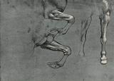 Leonardo da Vinci (Study on horses trampled) Art Poster Print Masterprint