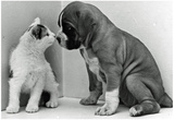 Puppy and Kitten Archival Photo Poster Print Posters