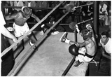 Tampa PAL Boxing 1964 Archival Photo Poster Posters