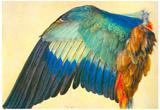 Albrecht Durer Wing of a Blaurake Art Print Poster Prints