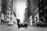 New York City Dog on Madison Avenue 1958 Archival Photo Poster Print Masterprint