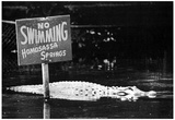 No Swimming Alligators Homosassa Springs Archival Photo Poster Print