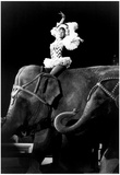 Big Apple Circus Elephant Rider Archival Photo Poster Posters