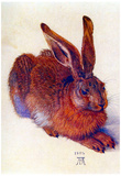Albrecht Durer Field Hare Art Print Poster Print