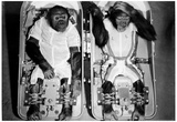 Space Monkeys 1962 Archival Photo Poster Photo
