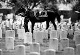 Riderless Horse Arlington Cemetary 1970 Archival Photo Poster Masterprint