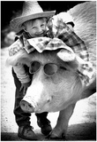 Shriners Circus Pig Archival Photo Poster Prints