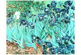 Vincent Van Gogh (Still Life - Irises) Art Print Poster Posters