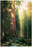 Albert Bierstadt The Big Trees Mariposa Grove California Art Print Poster Posters