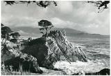 Pebble Beach Carmel California Archival Photo Poster Print Posters