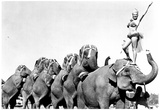 Shrine Circus Elephants Archival Photo Poster Photo