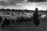 Woman Goat Herder Archival Photo Poster Print Masterprint