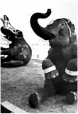 Performing Elephants Archival Photo Poster Posters