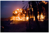 Palm Grove in Iraq (U.S. Detonated Explosions) Art Poster Print Photo