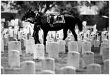 Riderless Horse Arlington Cemetary 1970 Archival Photo Poster Prints