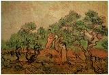Vincent Van Gogh Olive Picking Art Print Poster Pósters