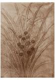 Leonardo da Vinci (Flowering reed grass) Art Poster Print Posters