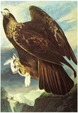 Audubon Golden Eagle Bird Art Poster Print Prints