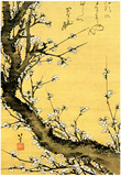 Katsushika Hokusai Flowering Plum Tree Art Poster Print Prints