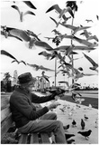 Feeding Birds 1978 Archival Photo Poster Posters