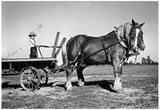 Boy with Horses on Farm Archival Photo Poster Print Print