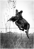 Hunting Dog Jumping Fence Archival Photo Poster Print Posters