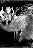 Girl on Elephant Archival Photo Poster Prints