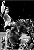 Circus Bears Archival Photo Poster Print