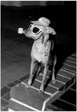 Chihuahua Smoking Pipe Archival Photo Poster Photo