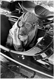 Dog in Motorcycle Sidecar Close-Up Archival Photo Poster Prints