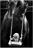 Girl Swinging from Elephant Archival Photo Poster Prints