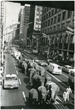 Circus Elephants in New York City Archival Photo Poster Print Posters