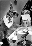 Dog Birthday 1981 Archival Photo Poster Posters